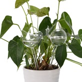 Garden Borosilicate Glass Transparent Watering Globes